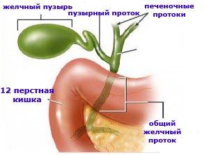 Гипотоническая дискинезия желчевыводящих путей